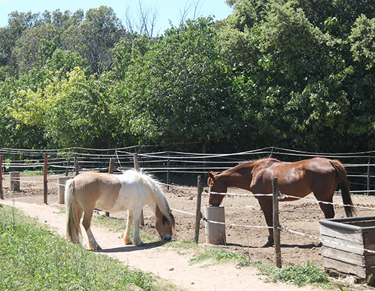 centre equestre Cuers-cours d'equitation La Garde-pension pour chevaux La Crau-baby-poney Cuers